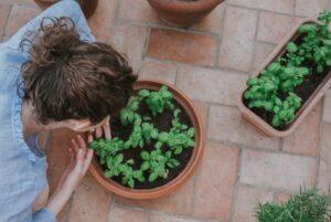 Im Topf gepflanzte Blumen